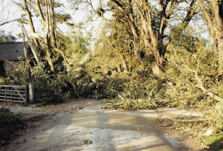 1987 storm damage at the entrance to Court Lodge, Stansted, Kent