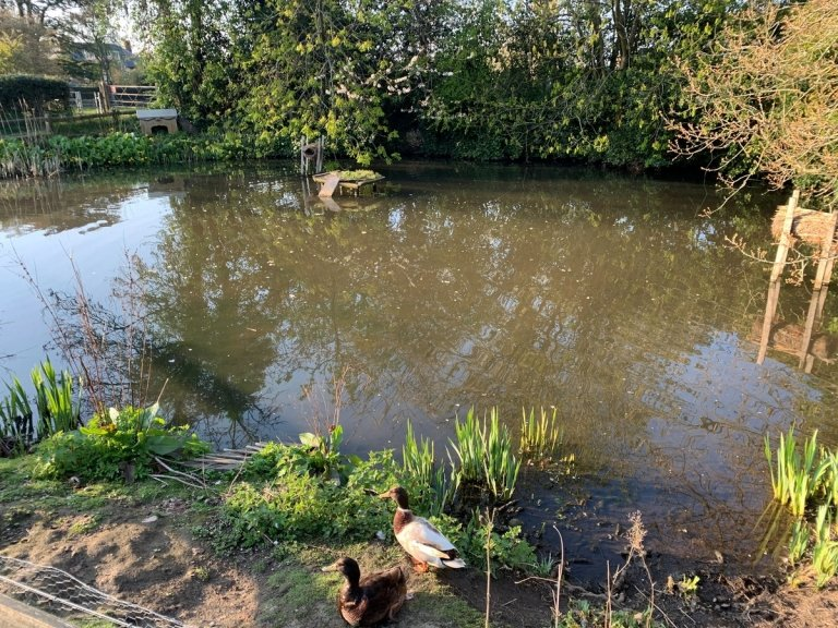 The pond in the centre of Fairseat, Kent (2019)