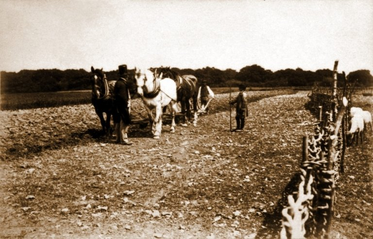 Mr Griffiths and ploughing team by Hall Wood, Stansted, Kent, in 1851